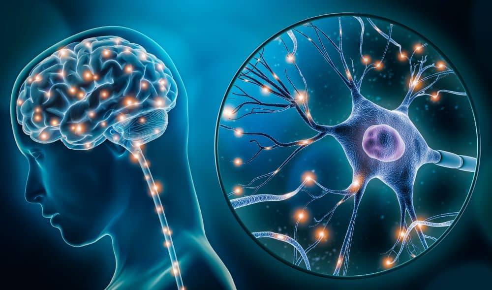 Brain activity/stimulation illustration.