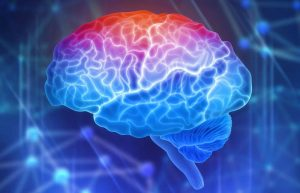 The brain is the central organ of the nervous system and has fascinating facts.
